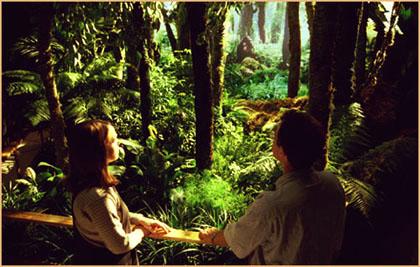 Dzanga Sangha Rainforest American Museum Of Natural History